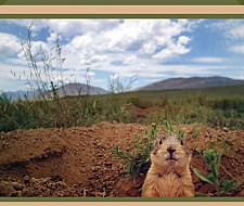 A Non-Lethal Management Guide for Gunnison's Prairie Dogs